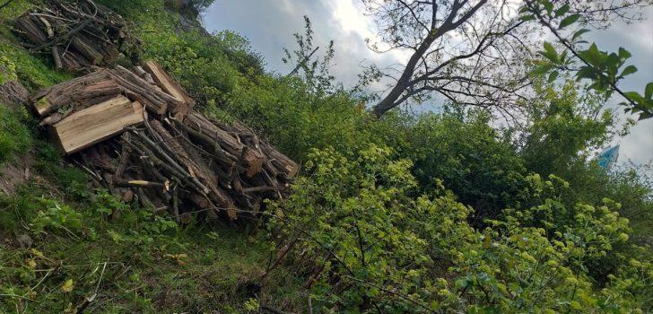 Trabzon'da ağaçların izinsiz kesilmesi