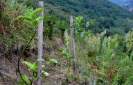 Trabzon dağları lavanta kokacak