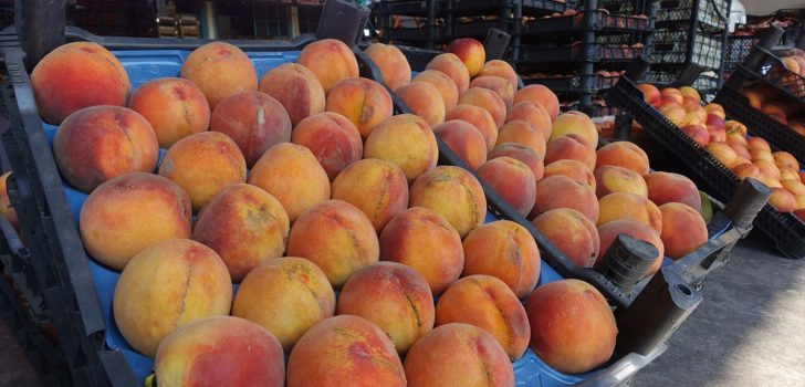 Doğu Karadeniz'den Rusya'ya yaş meyve sebze ihracatı