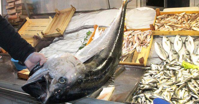 Trabzon'da balık tezgahları torikle süslendi