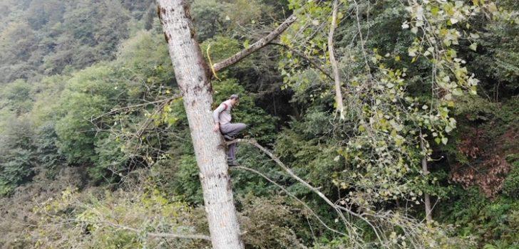 """Trabzon'da bir """"Tarzan"""""""