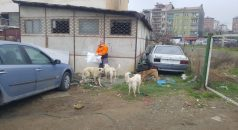 Trabzon, Rize ve Giresun'da koronavirüse karşı tedbirler