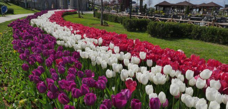 Trabzon'da 11 bini aşkın ağaç ve çiçek dikildi