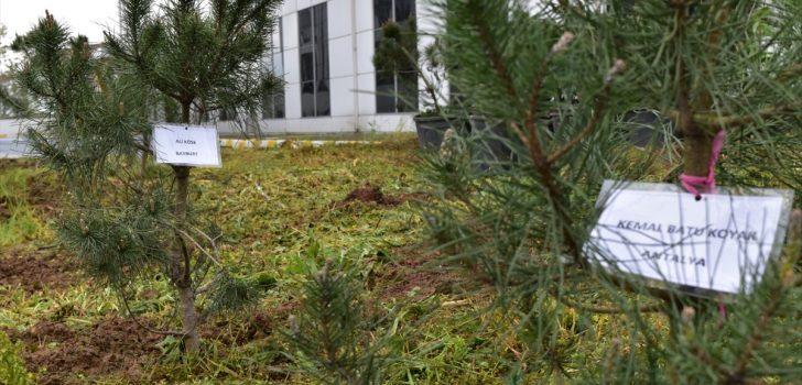 Trabzon'da karantinadaki vatandaşlar adına hatıra ormanı oluşturuldu