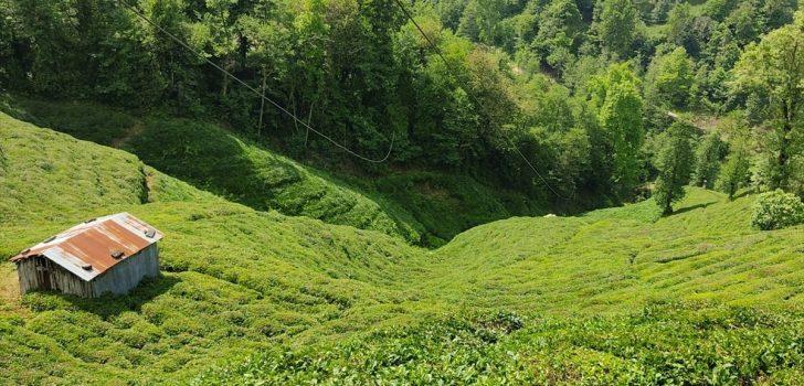 Trabzon'da elektrik akımına kapılan genç hayatını kaybetti