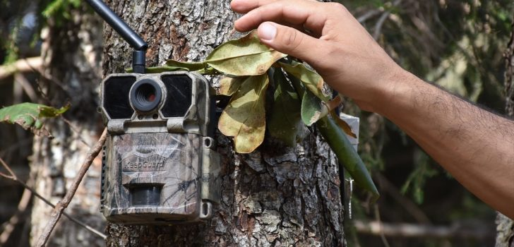 Fotokapanlar Trabzon'da suçlulara göz açtırmıyor