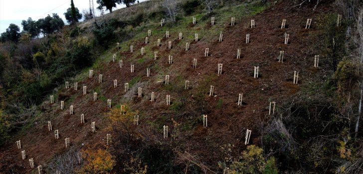Trabzon'da meyve fidanları vatandaşlara ek gelir getirecek