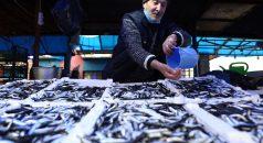 Hamsi fiyatları av yasağının kalkmasıyla yeniden düştü