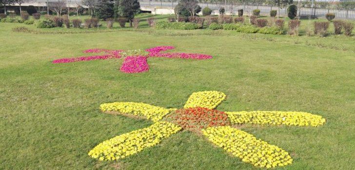 Trabzon'da park, bahçe ve refüjler çiçeklerle süsleniyor