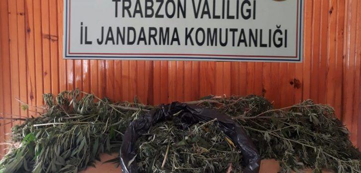 Araklı'da uyuşturucu operasyonu
