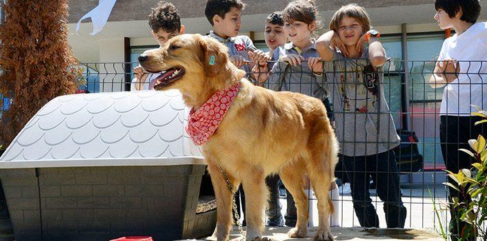 Trabzon'da her okula bir sokak köpeği