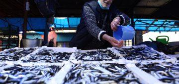 Karadenizli balıkçılar hamsi avının kısmi olarak durdurulmasından memnun