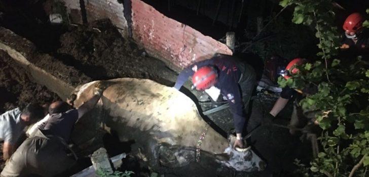 Trabzon'da bataklığa saplanan inek itfaiye ekiplerinin yardımıyla kurtarıldı