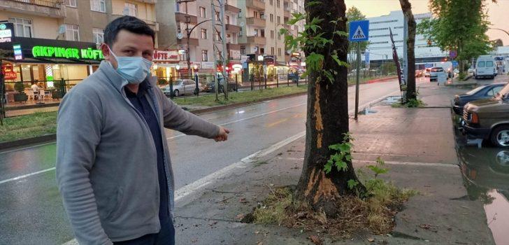 Trabzon'da ağaca yıldırım isabet etmesi güvenlik kamerasınca kaydedildi
